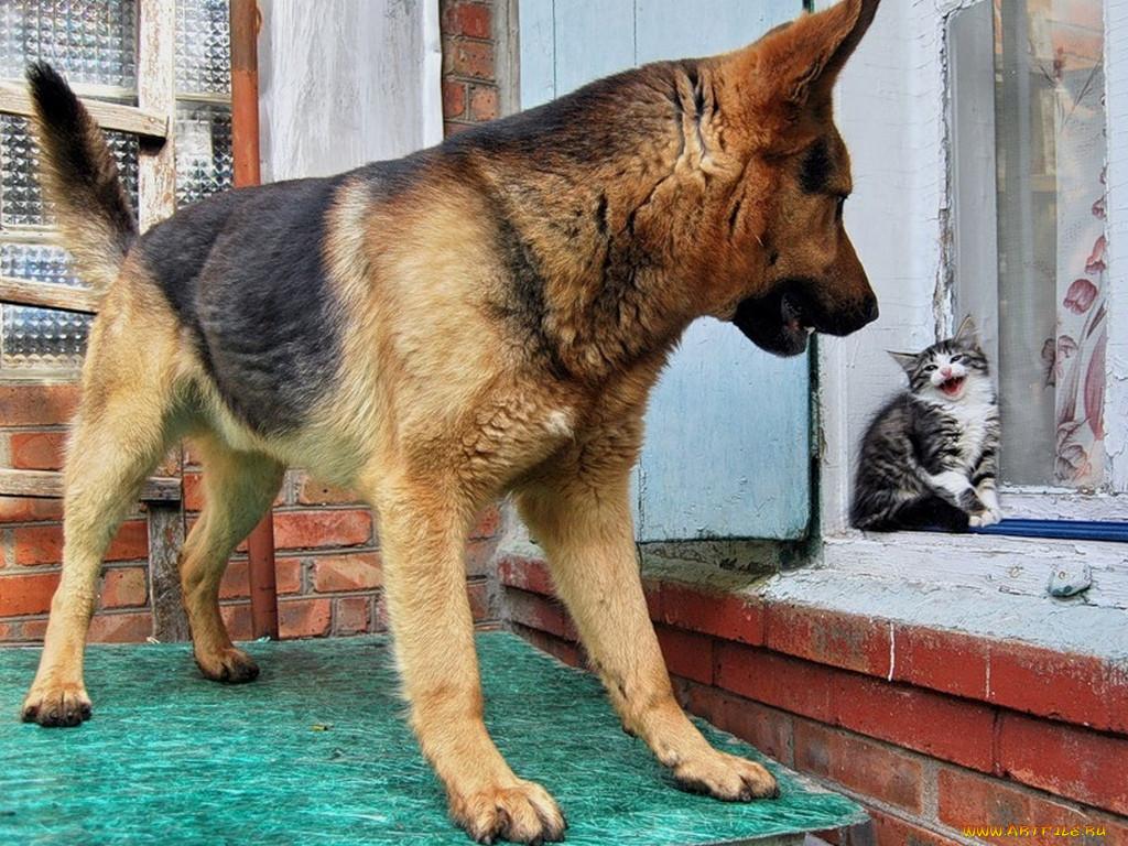 Картинки прикольные с собаками с надписью